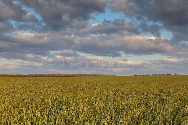The movement of the thunderclouds over the fields of winter wheat in early spring in the vast steppes of the Don. stock photography