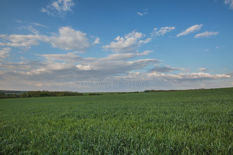 The movement of the thunderclouds over the fields of winter wheat in early spring in the vast steppes of the Don. stock photo
