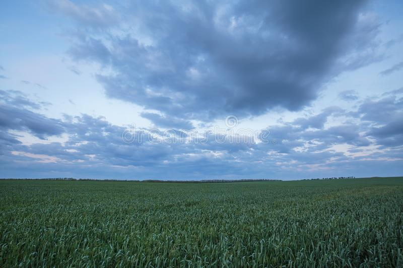 The movement of the thunderclouds over the fields of winter wheat in early spring in the vast steppes of the Don. royalty free stock photography