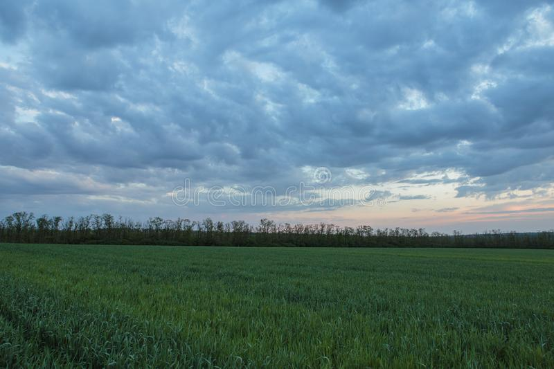 The movement of the thunderclouds over the fields of winter wheat in early spring in the vast steppes of the Don. royalty free stock image