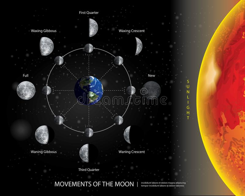 Movements of the Moon 8 Lunar Phases Realistic vector illustration