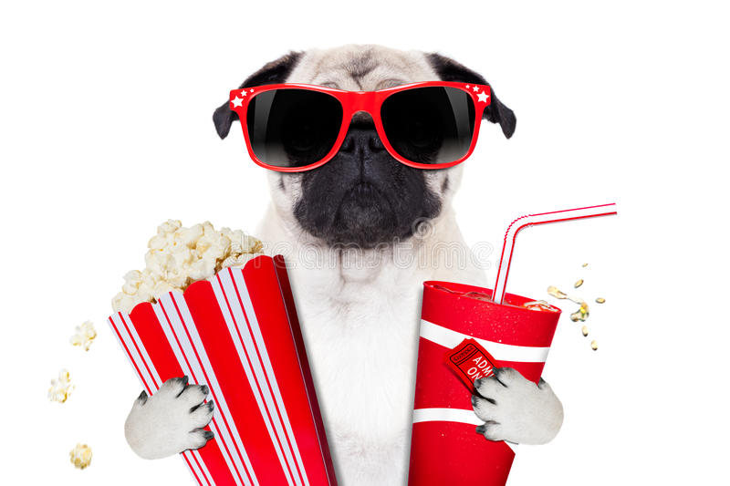 Movie dog. Cinema movie tv watching pug dog isolated on white background with popcorn and soda wearing 3d glasses