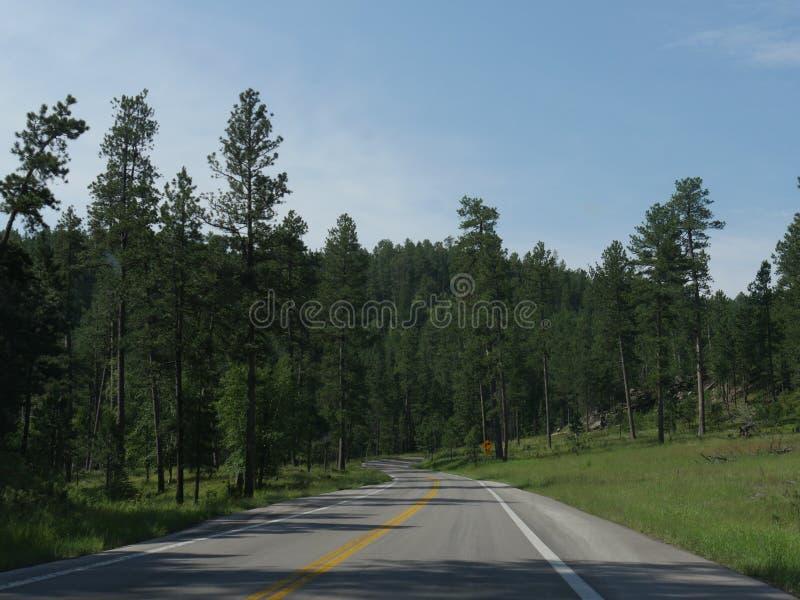 Movimentação cênico da estrada das agulhas, South Dakota fotos de stock royalty free