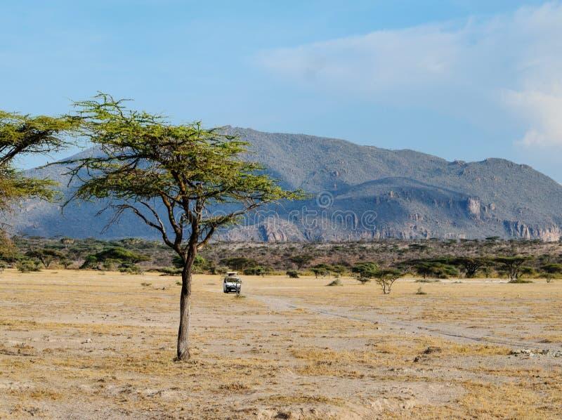 Movimentação do jogo na reserva nacional de Shaba, Kenya fotografia de stock