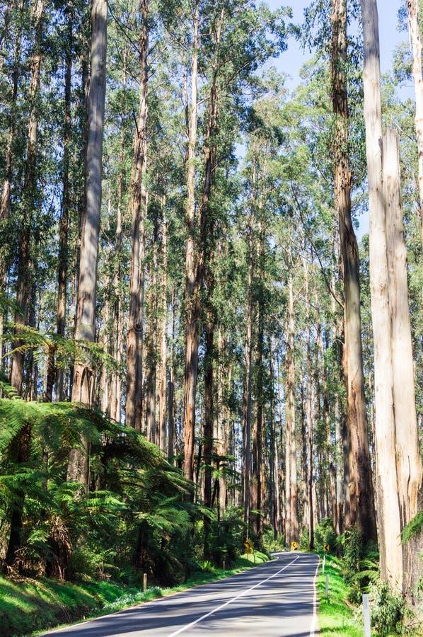 Movimentação preta através da grande escala divisora, Austrália do dente reto imagem de stock royalty free