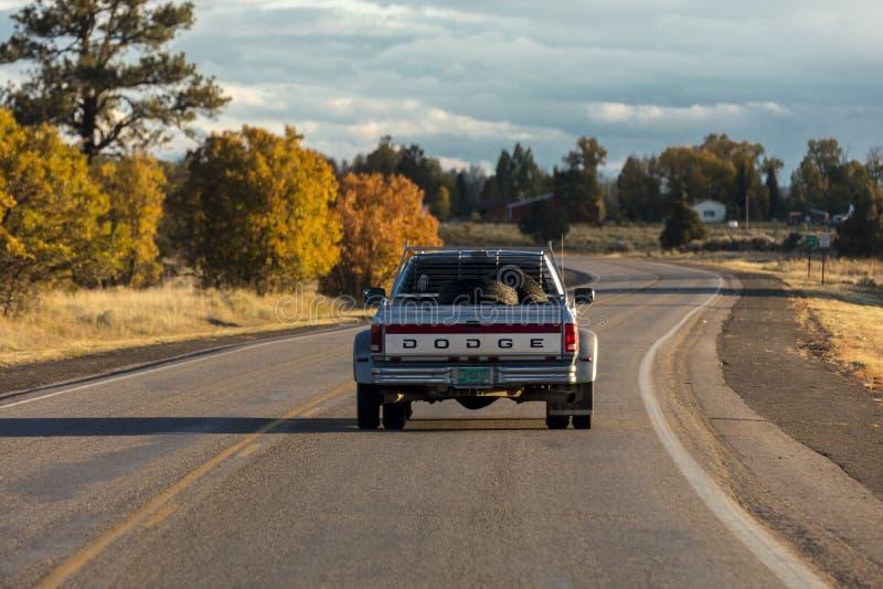 Movimentações do camionete de Dodge em Colorado do sul imagens de stock royalty free