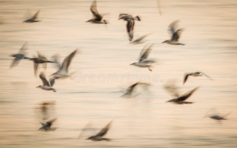 Movimento abstrato da velocidade do voo dos pássaros