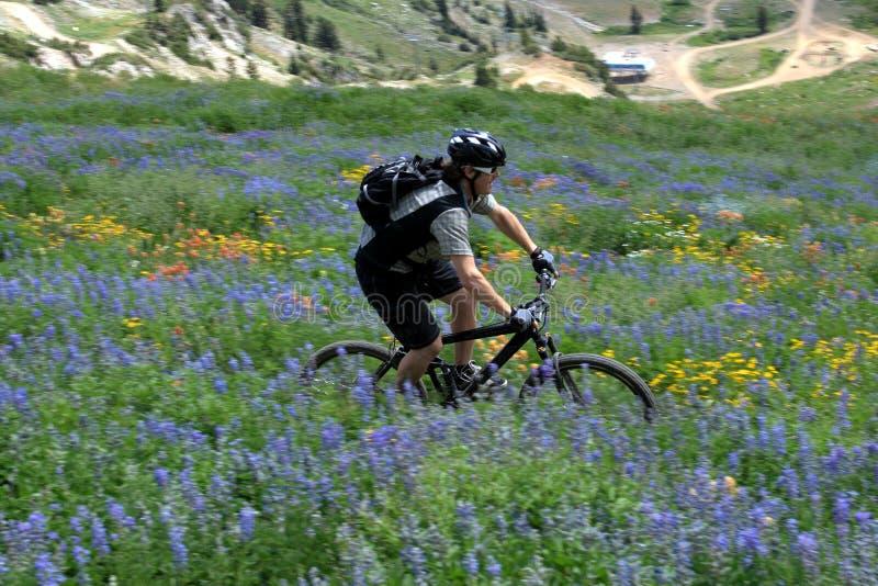 Movimento da bicicleta de montanha foto de stock