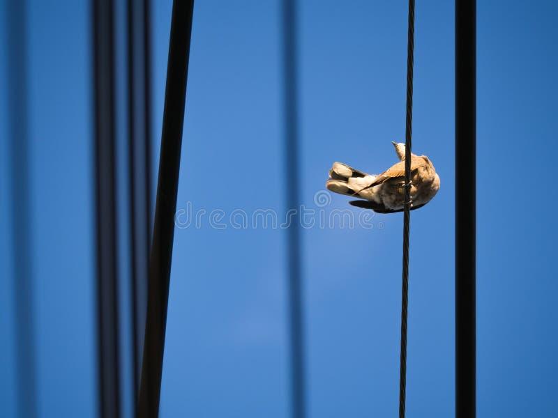 Movimiento de la paloma foto de archivo