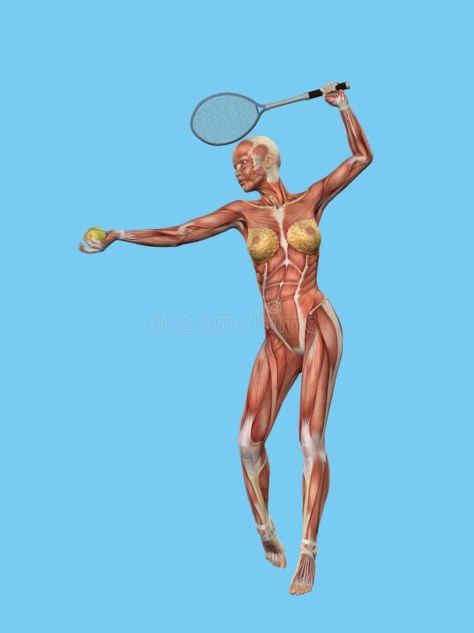 Movimiento del músculo de la mujer stock de ilustración