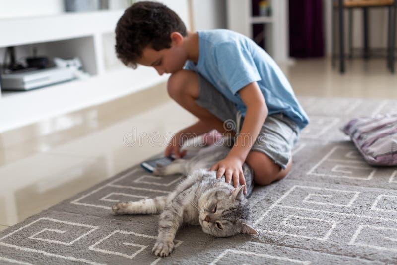 Movimientos del muchacho un gatito británico lindo, sentándose en el piso y jugando el teléfono fotografía de archivo libre de regalías
