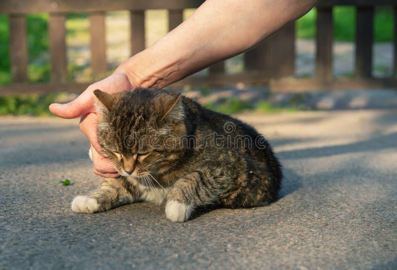 Movimientos humanos de la mano un gato sin hogar Gato de gato atigrado triste fotos de archivo libres de regalías