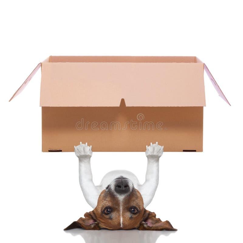 Moving собака коробки стоковое изображение rf