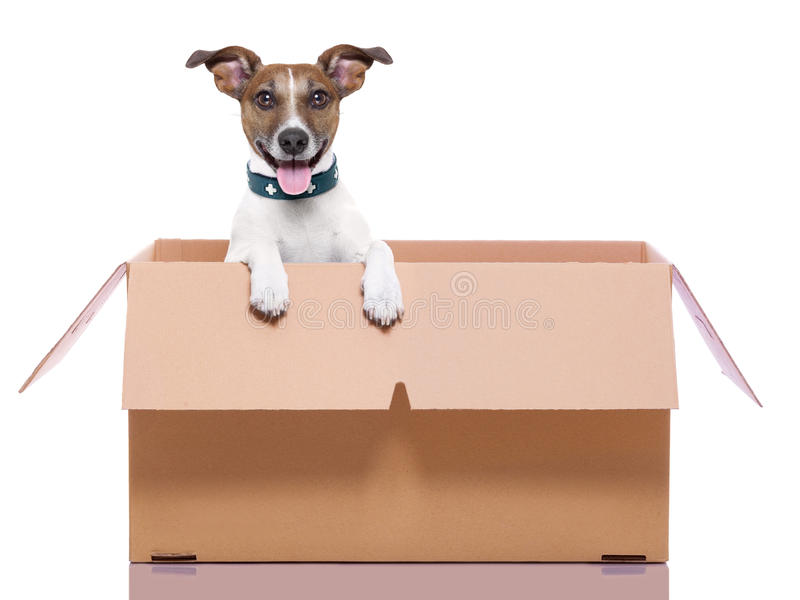 Moving box dog. Mail dog in a moving very big moving box