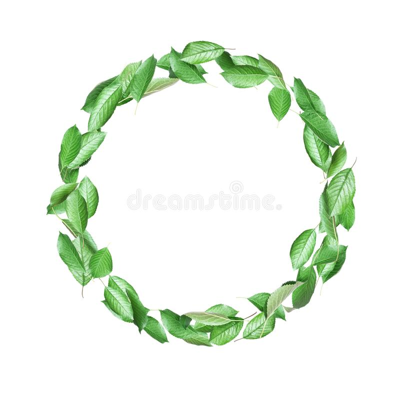 Free Moving Green Leaves In A Circle On A White Background Stock Photos - 149836483