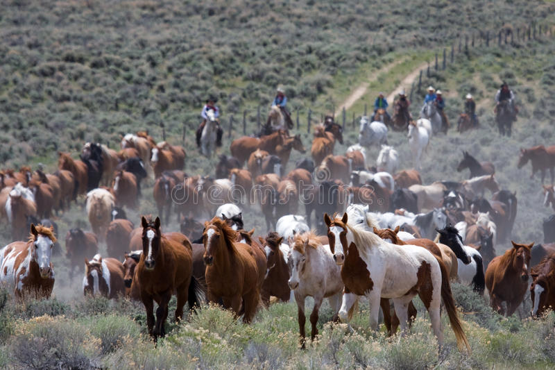 Download Moving the Herd stock image. Image of cowboys, cowboy - 16596525
