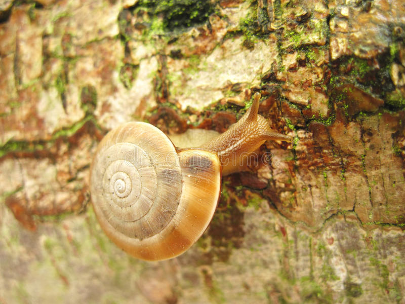 Download Moving Snail stock photo. Image of wild, close, wood - 14211470