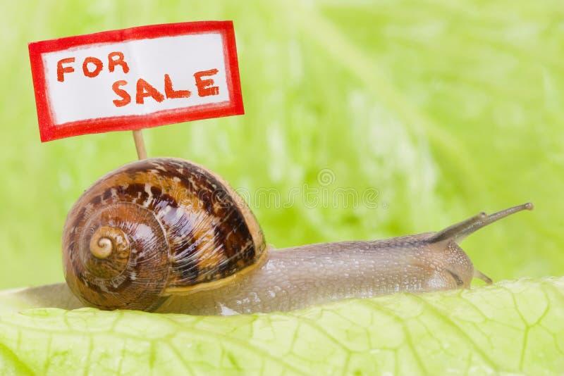 moving snail för hus arkivfoton