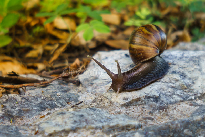Moving of snail. royalty free stock photo