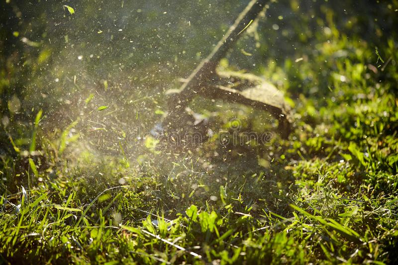 Mow the grass trimmer. the process of mowing the grass with a trimmer close-up. selective focus on uncut Tawa and scatter. Particles of cut grass. evening royalty free stock photography