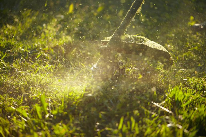 Mow the grass trimmer. the process of mowing the grass with a trimmer close-up. selective focus on uncut Tawa and scatter. Particles of cut grass. evening stock photos