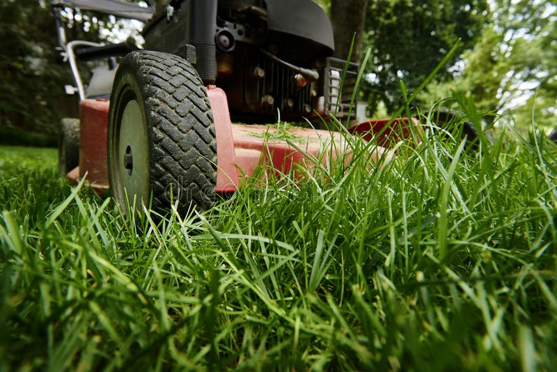 Mow lawn low angle of lawnmower cutting grass. royalty free stock photo