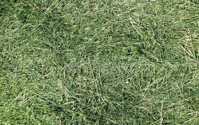 Mowed grass. The mowed grass of a city lawn collected in a heap stock photo