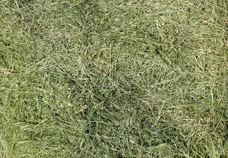 The mowed grass of a city lawn. Collected in a heap royalty free stock images