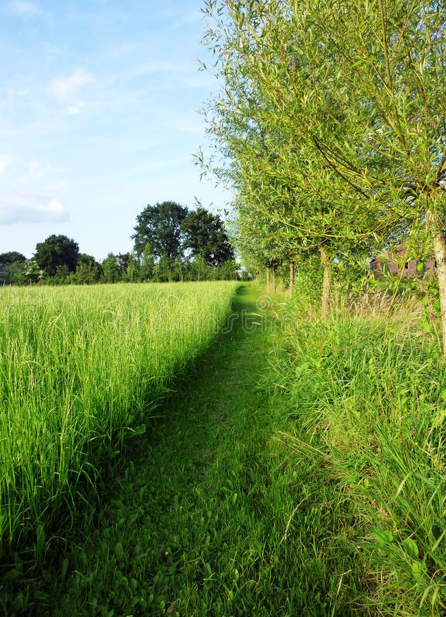 Mowed grass path on the Dutch countryside stock photos