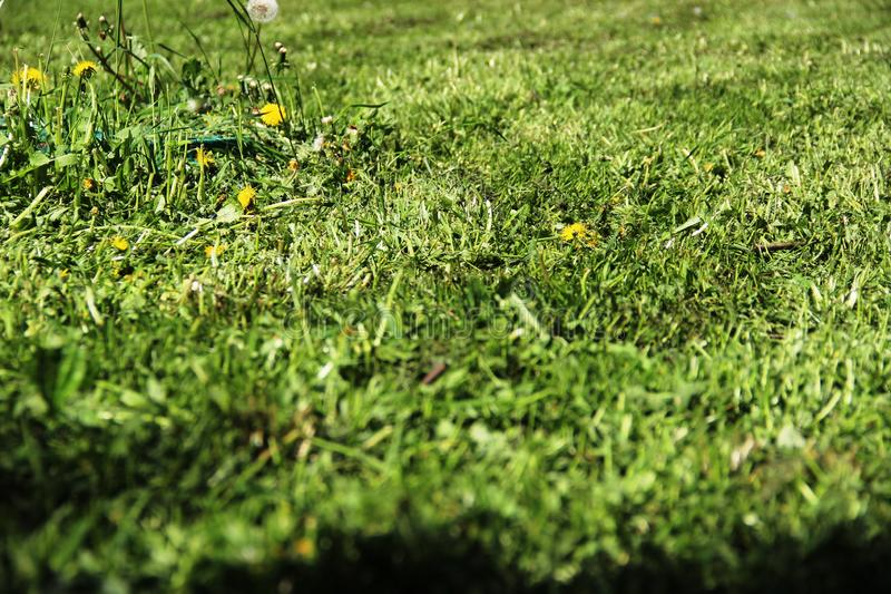 Mowed grass. urban lawn, ecology of the big city. Mowed grass, background. urban lawn, ecology of the big city stock photography