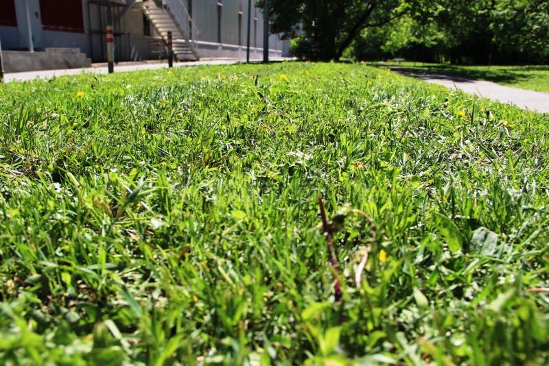 Mowed grass, the work of urban utilities. urban lawn. Selective focus stock photos