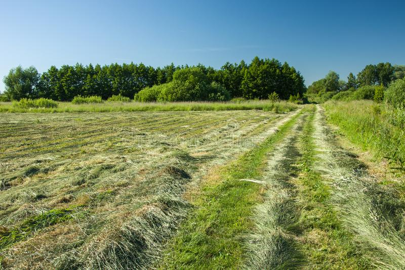 Mowed hay in the meadow stock photos