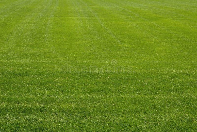 Mowed Lawn stock image