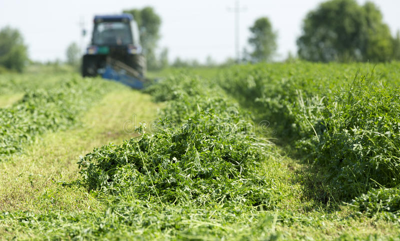 Mowing clover field with rotary cutter royalty free stock photo