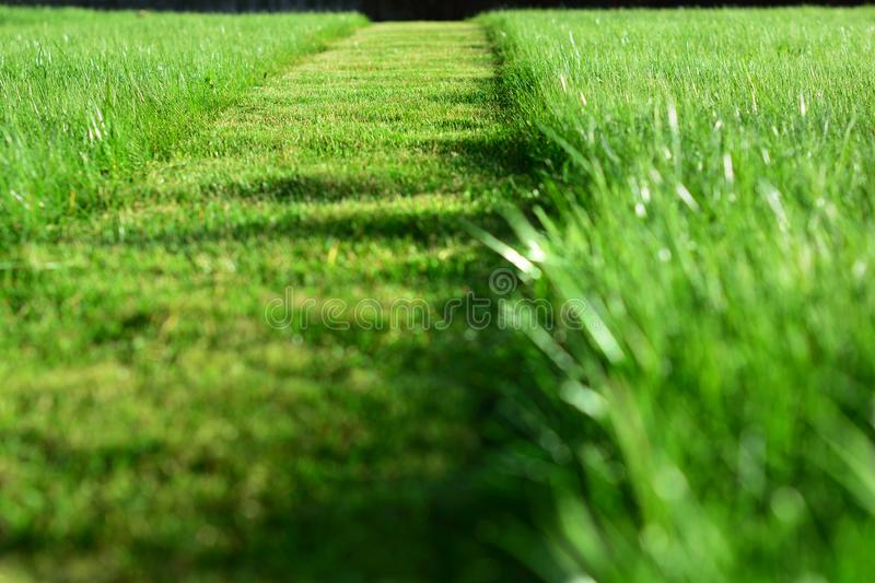 mowing the lawn. A perspective of green grass cut strip stock photos