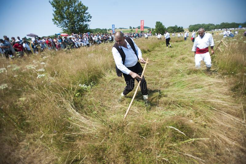 Mowing on Rajac mountain. RAJAC, SERBIA - JULY 19, 2015: Mowing on Rajac mountain, traditional competiton in Central Serbia, near Ljig city, during which farmers royalty free stock image