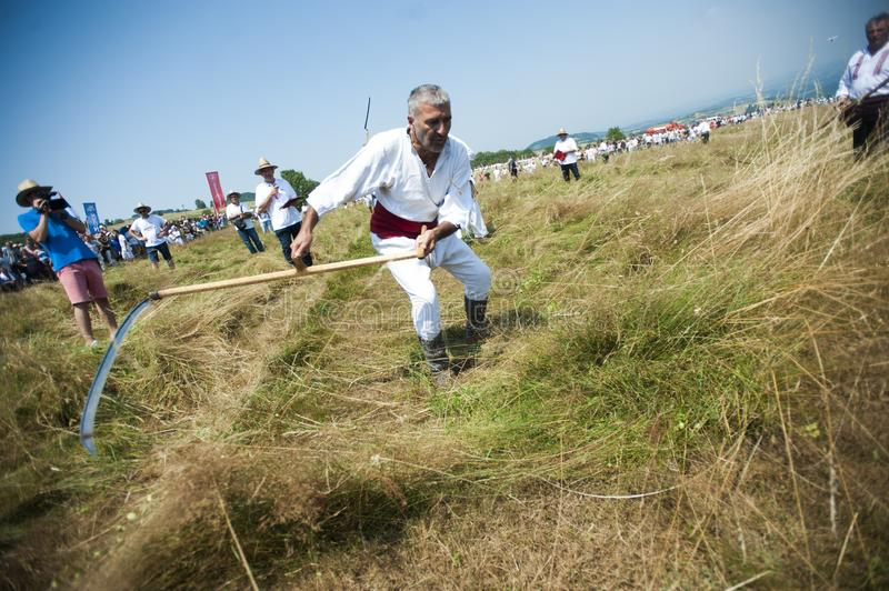 Mowing on Rajac mountain. RAJAC, SERBIA - JULY 19, 2015: Mowing on Rajac mountain, traditional competiton in Central Serbia, near Ljig city, during which farmers royalty free stock photography