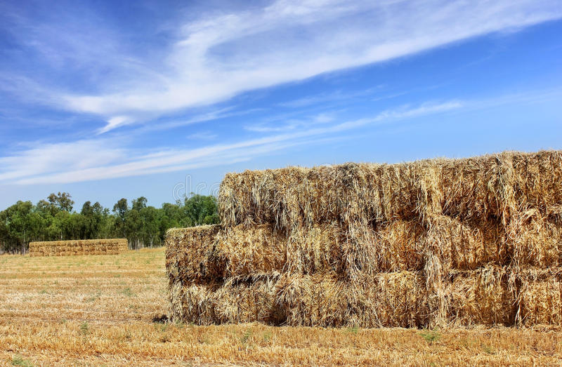 Download Mown Hay Harvested In Large Briquettes On The Field Stock Photo - Image: 35525258