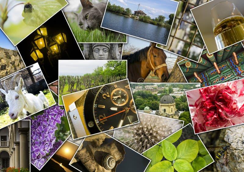 Mozaika kolaż z obrazkami różni miejsca, krajobrazy, kwiaty, insekty, przedmioty i zwierzęta, obrazy stock