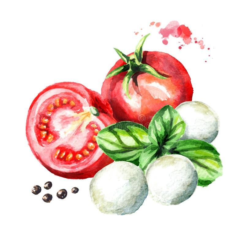 Mozarellakaas, Basilicum, tomaten Waterverfhand getrokken die illustratie, op witte achtergrond wordt geïsoleerd royalty-vrije illustratie