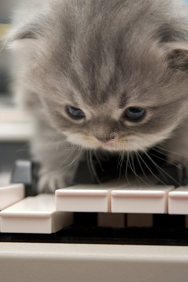 Mozart. stock photo