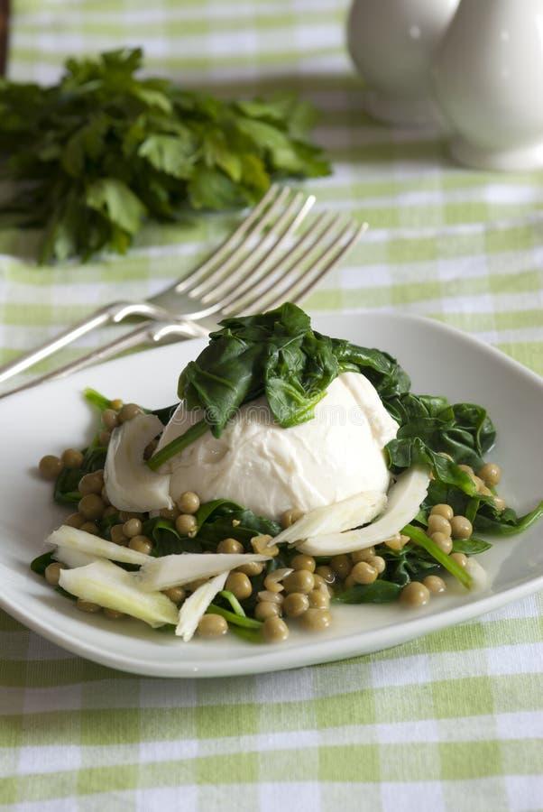 Mozzarella with salad. Freshly made mozzarella, spinach, fennel and pea salad stock photography