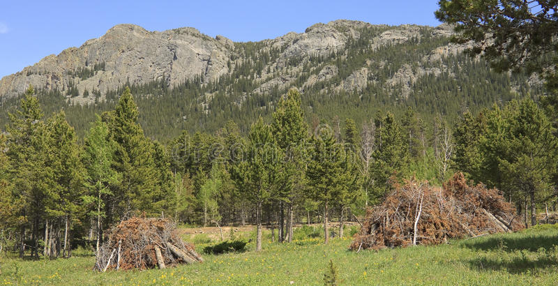 MPB forest clearance. Forestry management and tree clearance in the Rocky Mountains where many pine trees have been infested by the mountain pine beetle royalty free stock photo