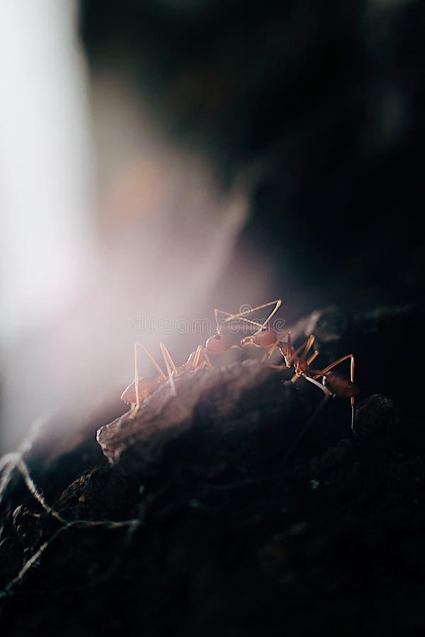 mrówka obrazy stock