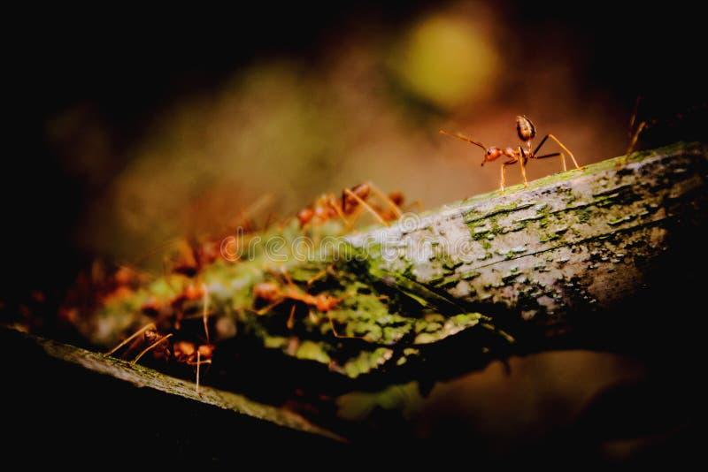 Mrówka mężczyzna zdjęcie royalty free