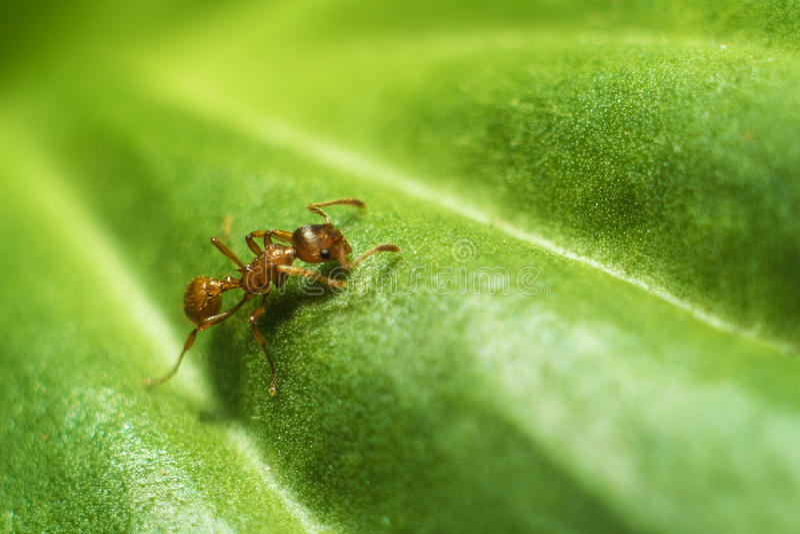 Mrówka na prześcieradle fotografia royalty free