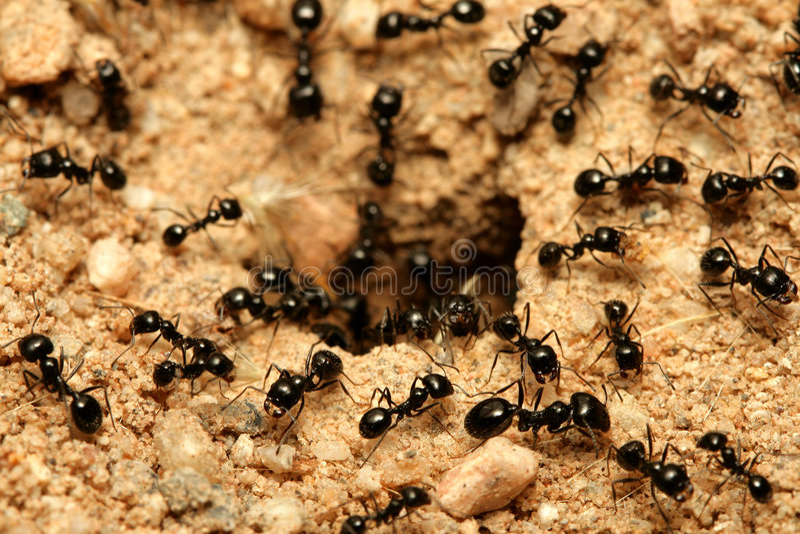 mrówki obraz royalty free