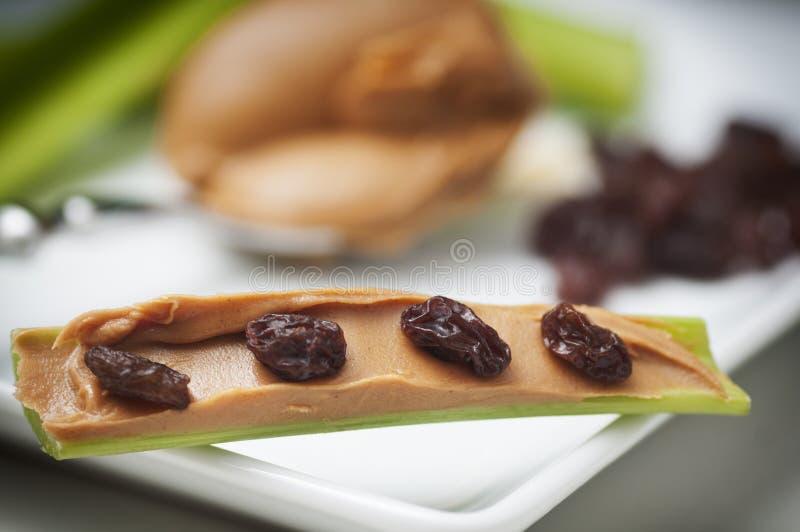 mrówki bela zdjęcie stock