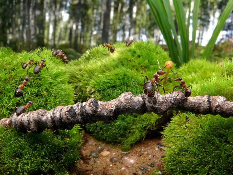 mrówki chodzić do szkoły fotografia royalty free