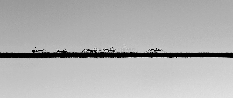Mrówki chodzi na arkanie zdjęcia royalty free